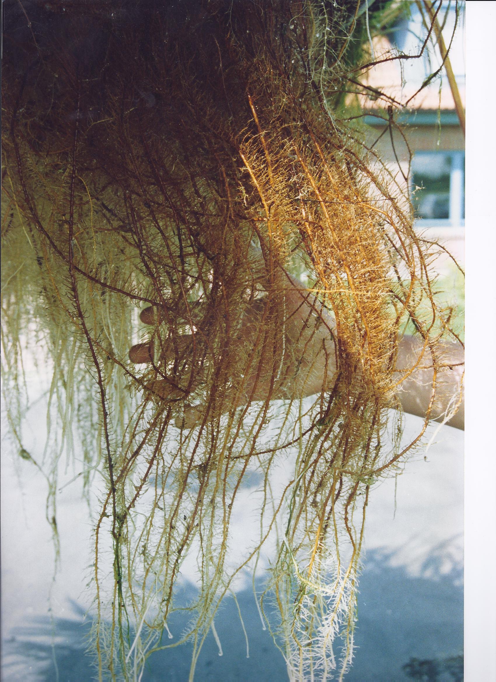 15 Tipps Für Klares Wasser Natürliche Algenbekämpfung Teil 4